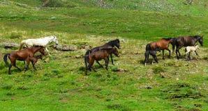 马牧群在山区 免版税库存图片