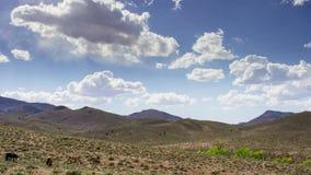马牧群在山的 吃草在草甸的马反对蓝天 免版税图库摄影