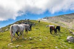 马牧群在山的 库存图片