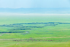 马牧群在草原的 免版税库存照片