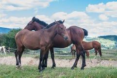 马牧群在草吃草在村庄 免版税图库摄影