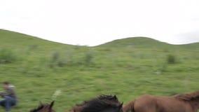 马牧群在阿拉木图山麓小丘吃草  影视素材