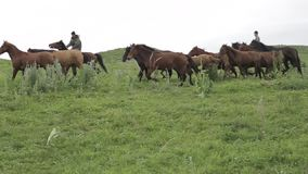 马牧群在阿拉木图山麓小丘吃草  股票录像