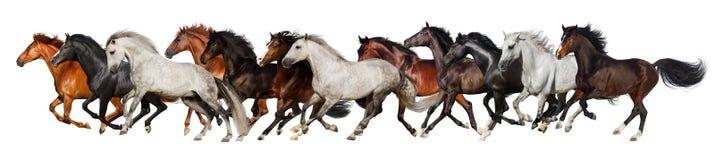 马牧群奔跑 免版税库存照片