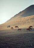 马牧群 图库摄影
