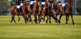 马球球员的行动在马球比赛期间的 免版税图库摄影