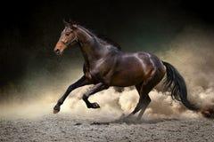 马疾驰在沙漠 库存图片
