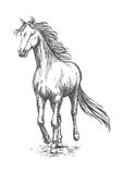 马疾驰赛跑 铅笔剪影画象 库存图片
