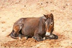 马疾驰 免版税库存照片