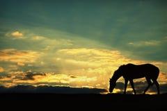 马的剪影 库存图片
