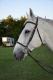 马的外形 免版税库存照片
