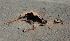 马的尸体 库存图片