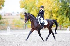 马的年轻车手妇女在驯马竞争 免版税库存照片