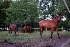 马的照片 库存图片