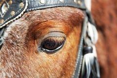 马的眼睛。 免版税库存图片