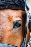 马的眼睛特写镜头  库存图片