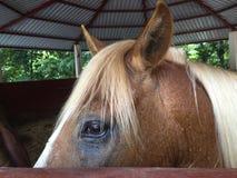 马的神色 免版税库存图片