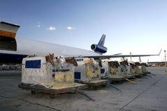 马的空中运输 图库摄影