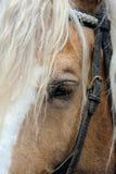 马的鞔具 免版税图库摄影