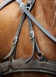 马的鞔具 库存照片
