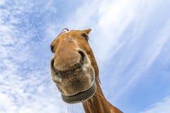 马的头和脖子在蓝天下 免版税库存照片