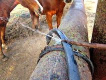 马的水管 库存照片