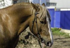 马的画象它是大 库存照片