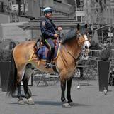马的NYPD警察 库存图片