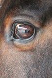 马眼睛与围场的反射的特写镜头细节 免版税库存照片