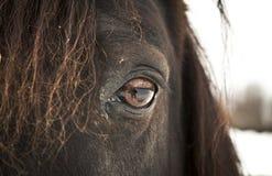 马眼睛(左眼睛)。 免版税库存图片