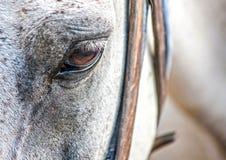 马眼睛 库存图片