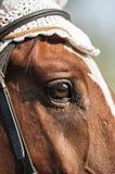 马眼睛 图库摄影