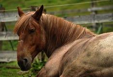 马睡眠 免版税图库摄影