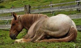 马睡觉 库存照片