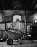 马站立的里面槽枥 免版税库存图片