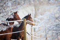 马系列冬天 库存图片
