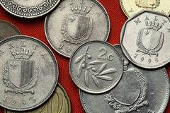 马耳他硬币  耦合europaea齐墩果橄榄色根同样树干 库存图片