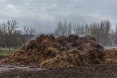 马肥料堆 库存图片