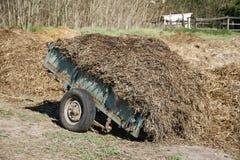 马肥料特写镜头与在马农场的干草混合了 免版税库存图片
