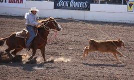 马背系住小牛的牛仔 免版税库存图片