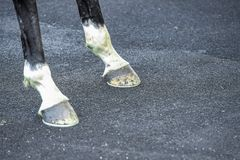 马腿和hoofs 免版税库存图片