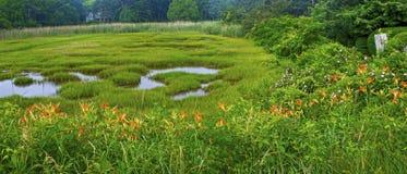 马萨诸塞沼泽地全景 免版税库存图片
