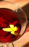 马蒂尼鸡尾酒红色 库存照片