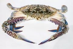 马螃蟹 库存图片
