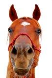 马表面 免版税图库摄影