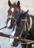 马被利用对推车 免版税库存照片
