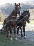 马被利用对推车 库存图片