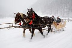 马被拉扯的爬犁 免版税库存图片