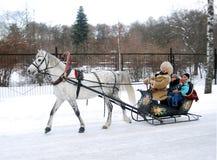 马被拉的雪橇白色 库存照片