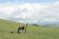 马被栓对杆 免版税图库摄影